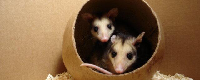Principios de rehabilitación de fauna